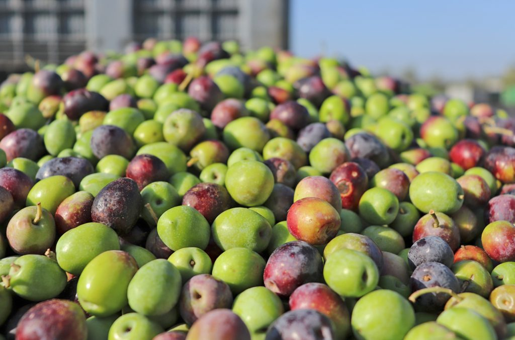 Aljaoliva aceitunas y aceite de oliva virgen extra