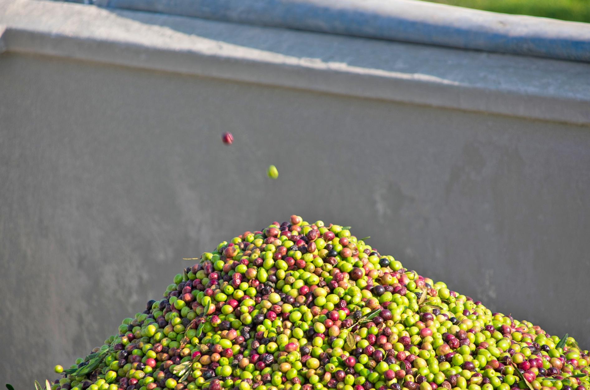 Aljaoliva olivas aceite de oliva virgen extra