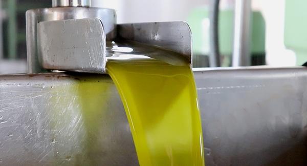 Molturacion-y-extracción-del-aceite-de-oliva-virgen-extra-AljaOliva